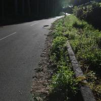 鉢盛山へ向かう道