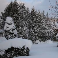 つれづれなるままに   2370  ドカ雪