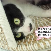 下関市「長府庭園」④&日向ぼっこ!夜遊び大好きでしゅ😹