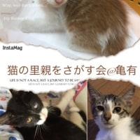 10月2日は猫の里親会です。