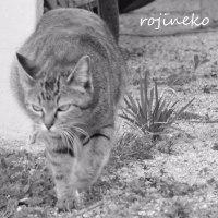 猫写倶楽部2