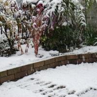 54年ぶりの雪だ~~