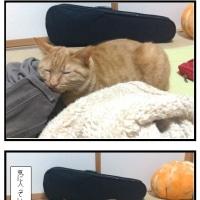 ズボンとつくし(茶トラ猫)