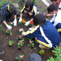 10月30日(日)会津坂下駅にて花植えボランティアを実施します!!
