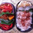 イカのトマト煮弁当