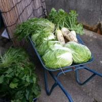 野菜のくじ引き