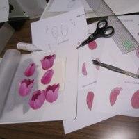 チューリップの組み立て・復習(押し花)