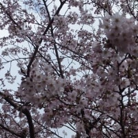 お花見いってきました~^^