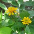 元気に咲く夏の花