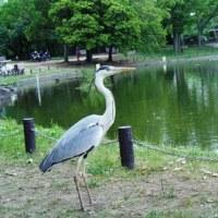 大仙公園に友人を案内