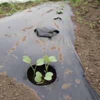 葉物野菜の収穫に行ってきました