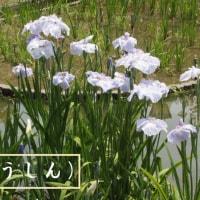 山口:花鳥風月~故郷の名勝・錦帯橋と岩国城へミニドライブ旅行①!