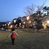 松江城、お花見