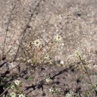 春の道草1