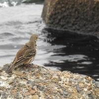 茜が浜と三番瀬に行ってきました -2/2- (平成28年12月07日)。