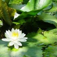 新緑の白野江植物公園