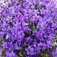 お花の植え替え(*^^*)