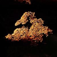紅葉 (花 4123)