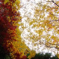 千光寺(岡山)紅葉