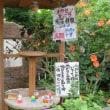 珍しい紫陽花とカサブランカとDrクリフォード、パークス(ツバキの品種)・・・・・・・・・のあるお寺