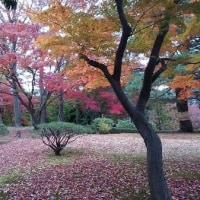 殿ヶ谷戸庭園 2016秋