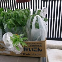 夏野菜の苗を「道の駅花園」へ買いに行く。