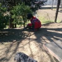 土曜日は兄貴とあーちゃんとさくらと公園に散歩