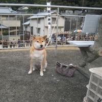 夢、菊間のお供馬を見に行く!