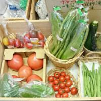 沖縄産直「野菜家元」さんの野菜入荷しました♪
