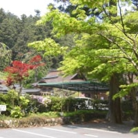 緑に囲まれる小國神社