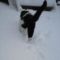 雪上のネコ