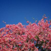桃色の花 秋を彩る