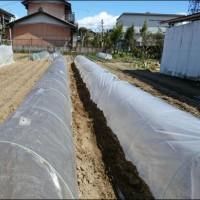 3月の畑 (トンネル栽培)