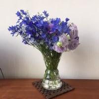 今週のお花。