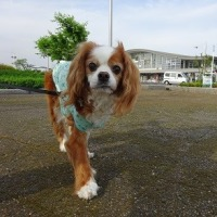 松江城に行ってみよう♪ ☆起床編☆