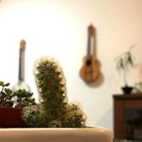 EHAGAKI #340≪植物のお話≫