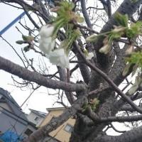 小さい春・・・みつけた・・・
