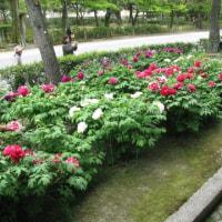 京都の賑わいと建仁寺