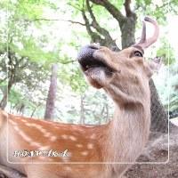 鹿さん、おもしろシリーズ