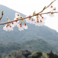 3月22日(水)卒業記念樹もお祝いしています