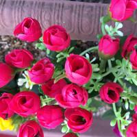 薔薇が(^ω^)