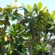 墓地の掃除とタイサンボクの花