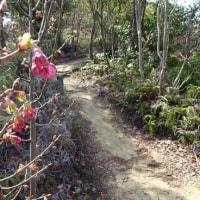 倉谷山など松山の低山 (3月22日)