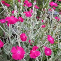 プチガーデン 夏の花に変わりつつ