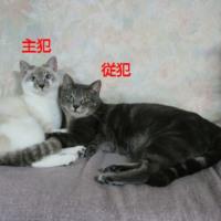 ネコ談義2016(1)いたずらネコたちのため、ひな飾りは飯川病院外来に