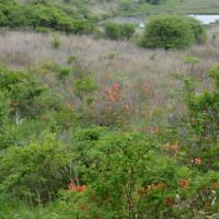 七島八島の今の様子・・危険個所もある・・・山野草見られるよ