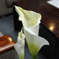 市長室の花(5月15日)