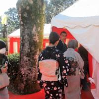 「今日の日記、小金井公園梅まつりの野点を楽しんで来ました」