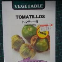 「トマティーヨ」を蒔種