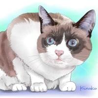 青い目の楓ちゃん